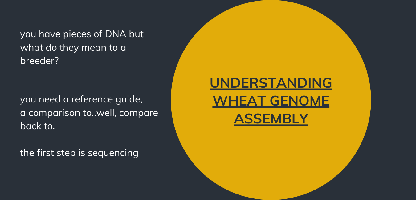 Understanding the wheat genome assembly